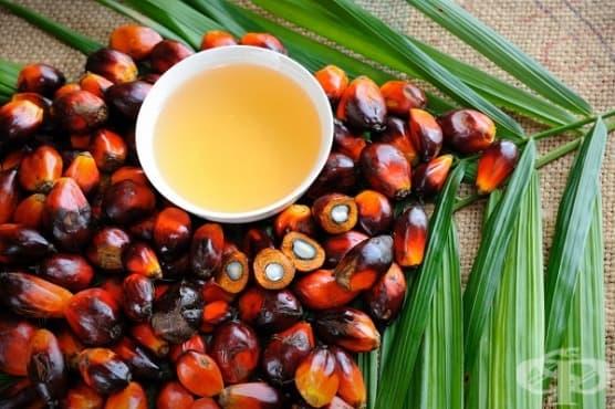 Избягвайте палмовото масло по 4 причини - изображение