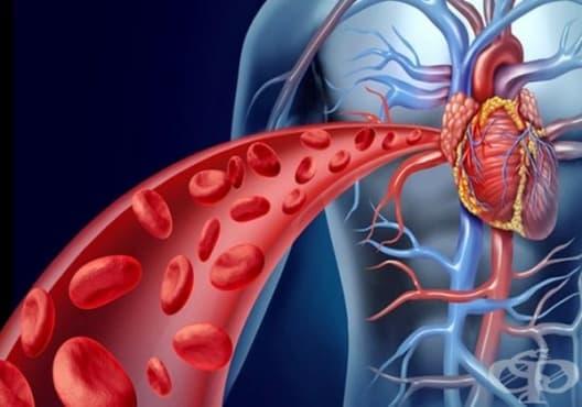 Подобрете кръвообращението с 30-секундно упражнение на ден - изображение
