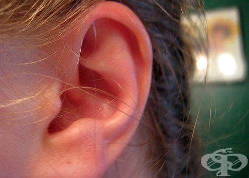 Правете 3 вида масаж на ушите за каляване на гърлото, носа и цялото тяло - изображение