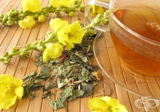 Пречистете белите дробове с чай от лопен - изображение