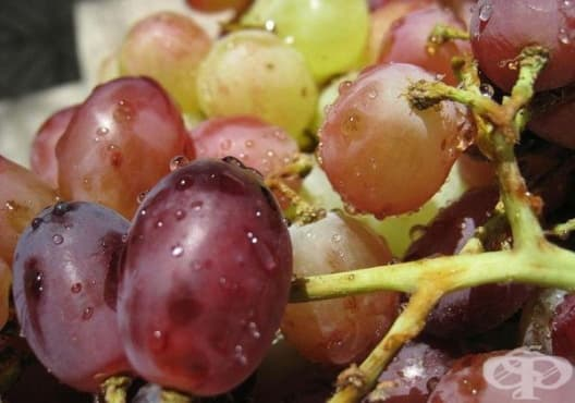 Пречистете бъбреците с грозде - изображение