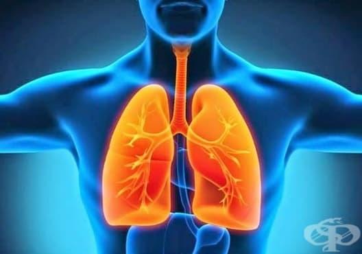 Пречистете тялото си от никотина с 5 вида храни - изображение