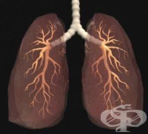Предотвратете емфизема, за да избегнете необратимите увреждания на белите дробове - изображение