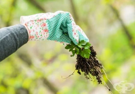 Премахнете плевелите от градината с 9 природни средства - изображение
