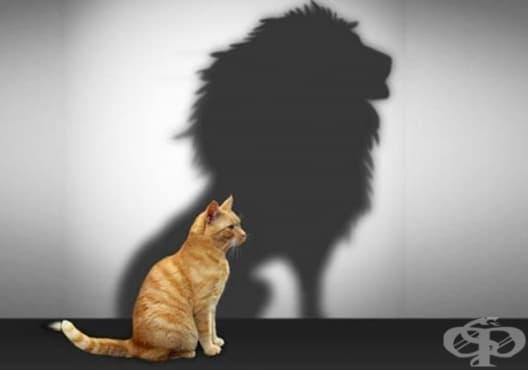 Придобийте увереност в себе си чрез 3 начина - изображение