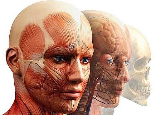 Разберете какви тайни крие човешкото тяло - изображение