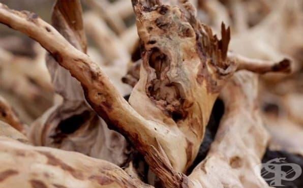 Използвайте сандалово дърво за заглаждане на тена - изображение