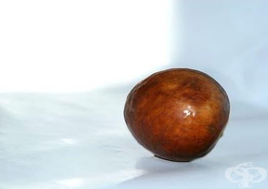 Използвайте семена от авокадо за масаж на ходилата  - изображение