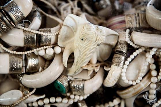 Вижте как да почиствате изделията от слонова кост - изображение