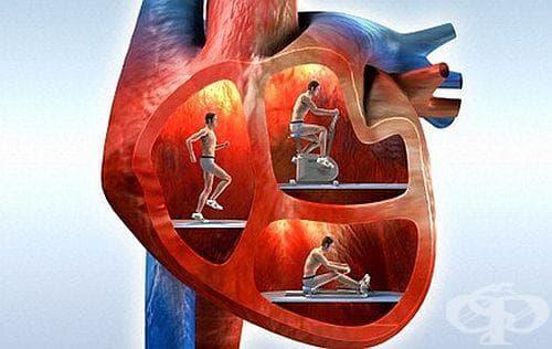 6 неща, които ще ви пазят от сърдечно-съдови болести - изображение