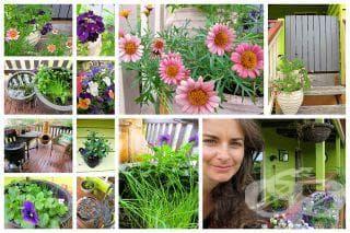 Създайте биоградинка с лековити растения на балкона си - изображение