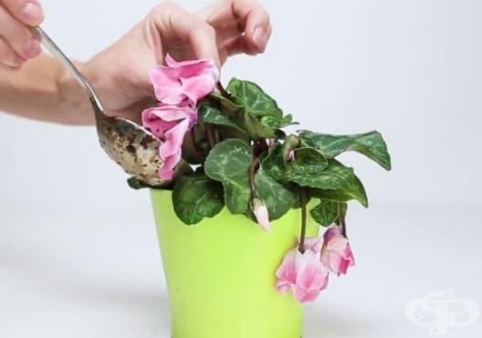 Върнете растенията към живот с тор от банан, кафе и яйца - изображение