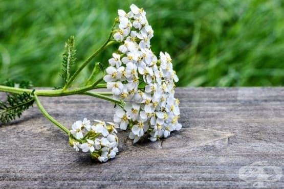 Използвайте 5 билки при болка, подуване и стомашни киселини - изображение
