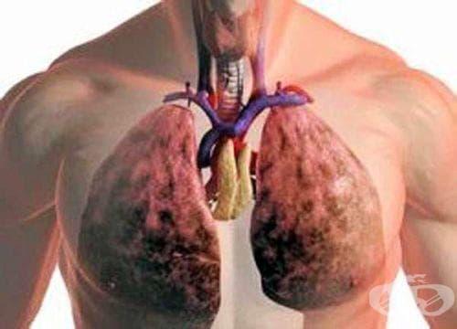 За изчистване на дробовете от слузестия секрет използвайте овес или борови връхчета - изображение