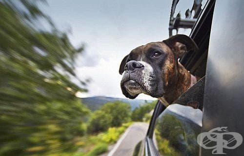 Защитете прозорците на колата от замъгляване с помощта на суров картоф - изображение
