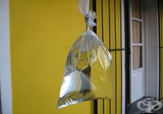 Защитете дома си от мухите само с водни торбички - изображение