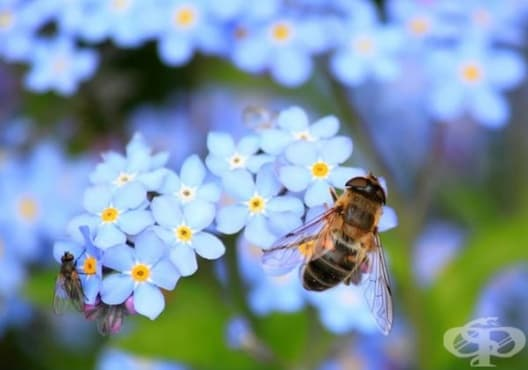 Защо пчелите са толкова важни и какво да правим, за да предотвратим тяхното изчезване - изображение
