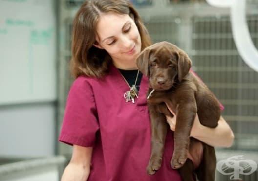 Заведете домашния любимец на ветеринар, ако има някои от следните 12 симптома - изображение
