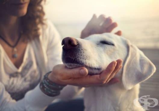 Заведете домашния любимец на ветеринар, ако забележите тези 7 предупредителни признака - изображение