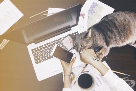 Данни на Евростат показват, че в България е най-малък броят на работещите от дома си - изображение