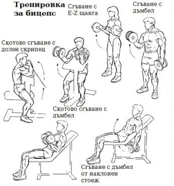 Пример за тренировъчна програма за напреднали в деня за бицепс - изображение