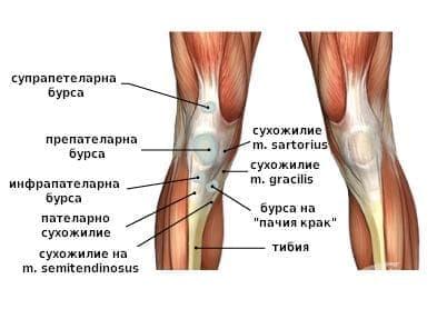 Бурсит в областта на коляното при спортисти - изображение