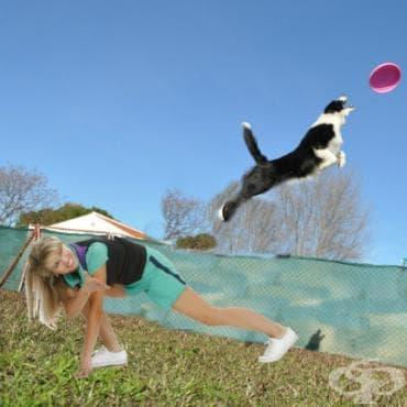 Фризби куче - изображение
