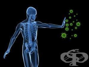 Спорт и имунна система - изображение