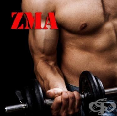 ZMA като спортна добавка - изображение