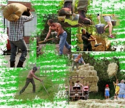 Агро фитнес или селскостопанската работа като начин за истинска тренировка - изображение