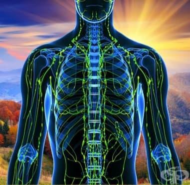 Най-добрият начин за възстановяване след тренировка: Активен лимфен дренаж - изображение