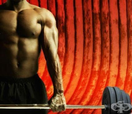 Осемте правила за качване на чиста мускулна маса - изображение