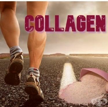 Използването на колаген в спорта - изображение
