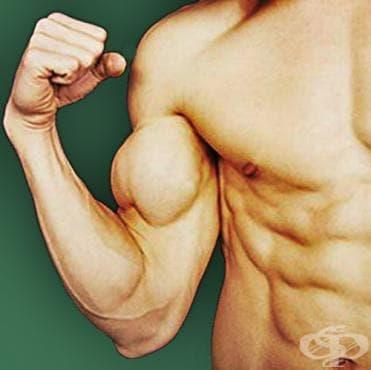 Диапазон на повторенията и мускулният растеж - изображение