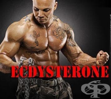 Екдистерон - изображение