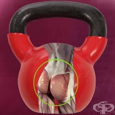 Най-ефективният начин за трениране на всички типове мускулни фибри в седалищните мускули - изображение