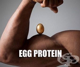 Яйчен протеин - изображение