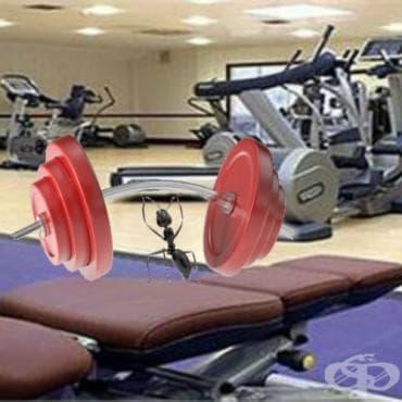 Най-лесният начин за изграждане на мускулна маса - изображение