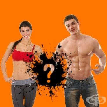 Колко често трябва да се тренира коремната мускулатура? - изображение