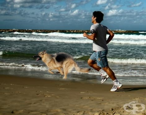 Най-добрите породи кучета за тренировъчни партньори на бегачите - изображение