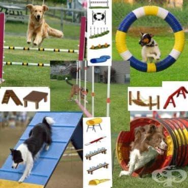 Аджилити за кучета - изображение
