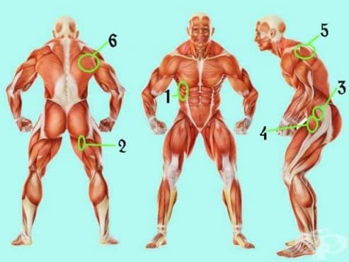 6 мускула, които не можете да игнорирате - изображение