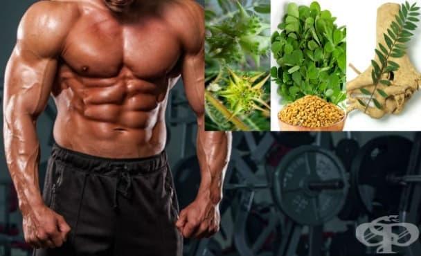 Повишаване на тестостерона с натурални суплементи - изображение