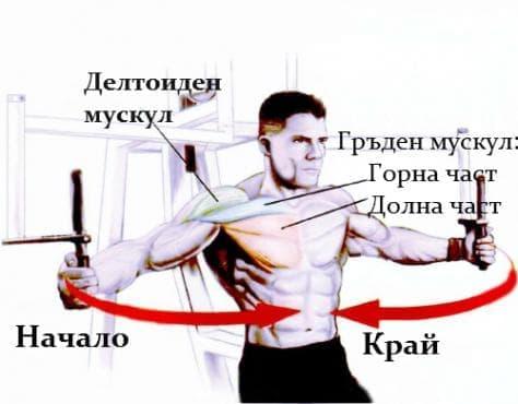 Тренировка за гърди на пек дек машина - изображение