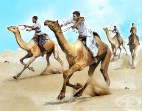 Състезания с камили - изображение
