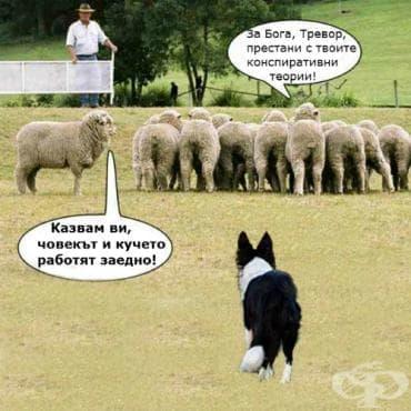 Състезание за овчарски кучета - изображение