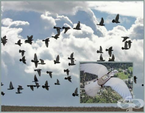 Състезания с гълъби - изображение