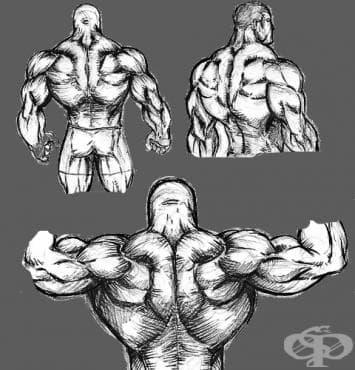 3 съвета при тренировка за гръб - изображение