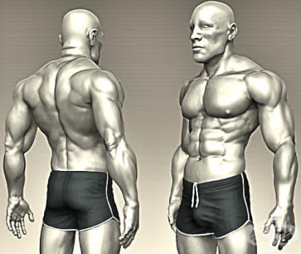 Скулптуриране на тялото #1 (част 1) - изображение