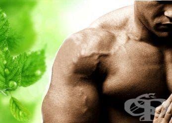 Тестостерон стимулиращи добавки в спорта (тестостеронови бустери) - изображение